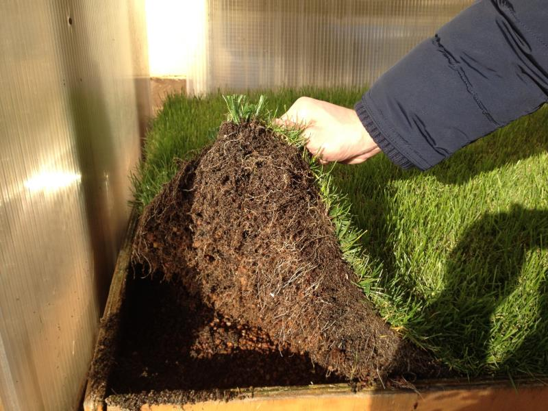Roots under artificial grass